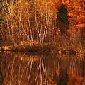 Restes D'automne by Aimelle
