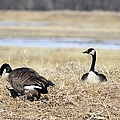 Restful Migration by Bonfire Photography