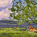 Resting Among The Bluebonnets by Priscilla Burgers
