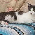 Resting Cat by Michelle Powell