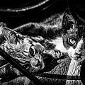 Resting Cats by Desislava Panteva