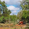 Resting Longhorn Bull - San Marcos Texas Hill Country by Silvio Ligutti