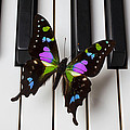 Resting On The Piano by Garry Gay