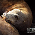 Resting On The Pier by Micki Findlay