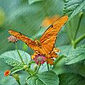Resting Orange Butterfly by Thomas Woolworth