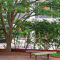 Resting Place Benches - Nc State by Paulette B Wright