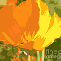 Retro Abstract Poppies 2 by Artist and Photographer Laura Wrede