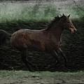 Retro Horse by Angel Ciesniarska