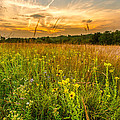 Retzer Wildflower Sunset by Andrew Slater