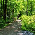Wooded Path 20 by Robert McCulloch