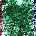 Rgb Trees by Ron Hedges