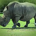 Rhino And Friend by MTBobbins Photography