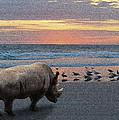 Rhino Beach by Jerry Hart
