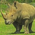 Rhino Look by MTBobbins Photography