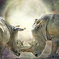 Rhino Love by Carol Cavalaris