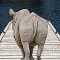 Rhino On The Dock by Les Palenik