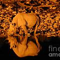 Rhino Reflection by Alison Kennedy-Benson