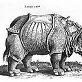 Rhinoceros No 76 From Historia Animalium By Conrad Gesner  by Albrecht Durer