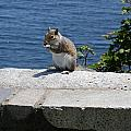 Rhode Island Squirrel by Christiane Schulze Art And Photography