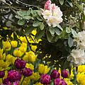 Rhodies And Tulips by Louise Magno
