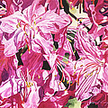 Rhodo Blossoms by David Lloyd Glover