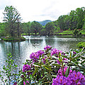 Rhododendron Blossoms And Mountain Pond by Duane McCullough