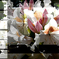 Rhododendron Collage by Steve Karol
