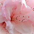 Pink Rhododendron Flower by Athena Mckinzie