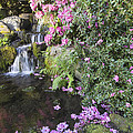 Rhododendron Flowers By Waterfall by Jit Lim