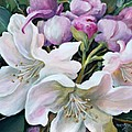 Rhododendron by Marta Styk