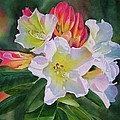Rhododendron With Red Buds by Sharon Freeman