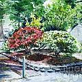 Rhododendrons In The Yard by Zaira Dzhaubaeva
