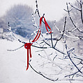 Ribbon In Tree by Amanda Elwell
