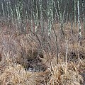 Ribbons On March Color In A Wetland Of Palenville by Terrance DePietro