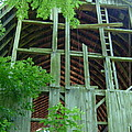 Ribs Of A Decaying Barn by Susan Wyman