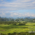 Rice Farming In China by David Davis