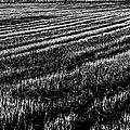 Rice Paddies by Edgar Laureano