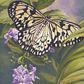 Rice Paper Butterfly by Lucie Bilodeau