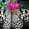 Rice Paper Butterfly On Pink by MTBobbins Photography