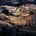 Rice Terrace Field Of Yuan Yang by Kim Pin Tan
