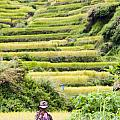Rice Terraces by Tuimages