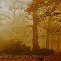 Richmond Park 11 by Simon Kennedy