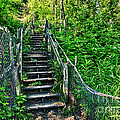 Rickety Stairs by Lori Frostad
