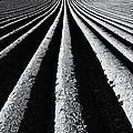 Ridge And Furrow by Tim Gainey