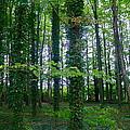 Ridgeway Trees by Denise Mazzocco