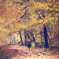 Riding A Bike In Autumn by Leslie Banks