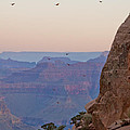 Riding The Air Currents Of The Grand Canyon by Her Arts Desire