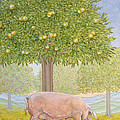 Right Hand Orchard Pig by Ditz