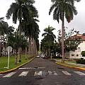 Right Side El Prado Sidewalk by Vladimir Berrio Lemm