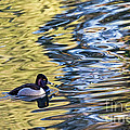 Ring-neck Reflections by Kate Brown